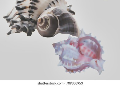 A semi-abstract seashell arrangement on a solid ground makes a lovely marine background.