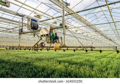 Semi-automatic spraying robot in a Dutch greenhouse specialized in the cultivation of chrysanthemum cut flowers.