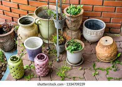 Semi-dry plants and flowers in clay pots on metal stand and other plants in garden