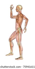 Semi-transparent image of a man standing sideways, with her arms and leg bent - showing the skeleton with a semitransparent overlay of the muscles. 3D render.