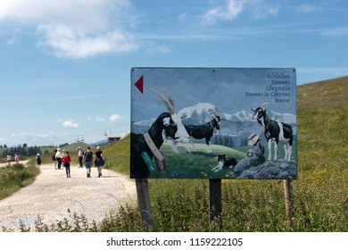 SEMNOZ, HAUTE SAVOIE / FRANCE july 08 2018 : at the top of Semnoz , view of the trail and tourists who follow a sign where we see painted goats and different cheeses produced by neighboring