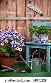 Senetti flower in terracotta pot with garden tools outside the potting shed