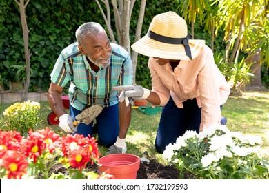 Una pareja de alto rango de afroamericanos pasa su tiempo en el jardín en un día soleado, plantando flores. Distanciamiento social y autoaislamiento en aislamiento de cuarentena.