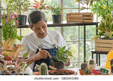 Senior asian retirement old man in casual outfit doing a hobby with happy and relax gardening tree plant in greenhouse garden farm