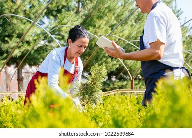 Senior couple of gardeners or sellers using tablet and taking online orders at coniferous plant nursery. Small business