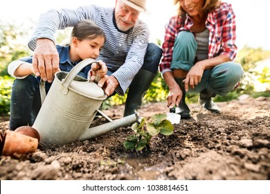 Senior couple with granddaughter gardening in the backyard garden.