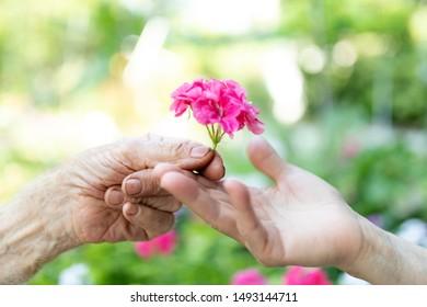 Senior couple hands giving flower
