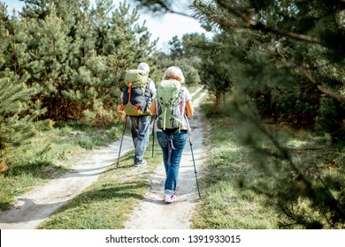 Senior couple hiking with backpacks on the road in the young pine forest, back view
