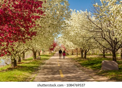 Senior couple holding hands taking a stroll along path lined with blooming crab apple trees in spring