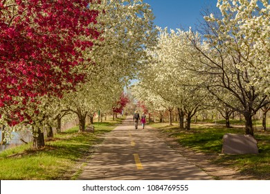 Senior couple holding hands walking along path lined with blooming crab apple trees in late afternoon sunlight