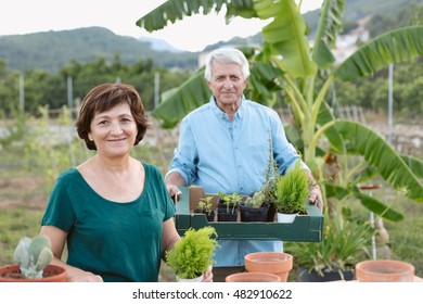 Senior couple planting some plants into terracotta pots. / Couple working in their garden