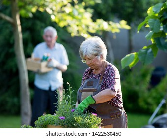 Senior couple potting plants and working in garden in spring time