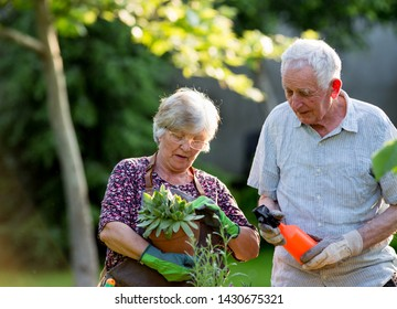 Senior couple potting and watering plants in garden in spring time