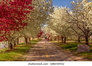 Senior couple taking a walk holding hands on a urban hiking path lined with blooming crab apple trees in late afternoon sunlight