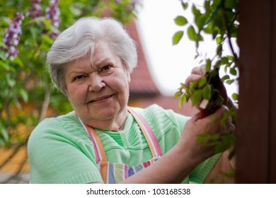 Senior cut roses