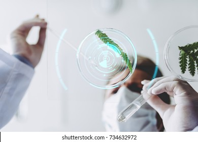 Senior experienced scientist is working in laboratory. Doing investigations with leaves and Petri dish. Genetic engineering. Making biological discovering. Biochemistry, biotechnology, cloning.