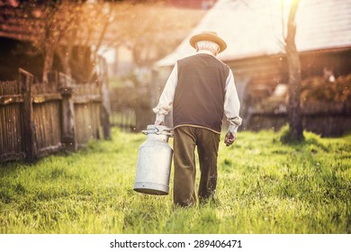 Senior farmer carrying kettle full of milk