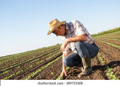Senior farmer in a field examining crop, focus on hand.