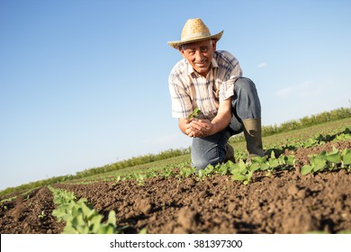 Senior farmer in a field holding crop in nis hands