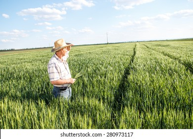 Senior farmer in a field looking into the distance