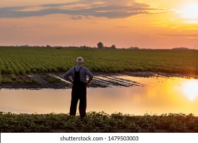 Senior farmer in overalls standing beside flood area on field. Natural disasters in agriculture