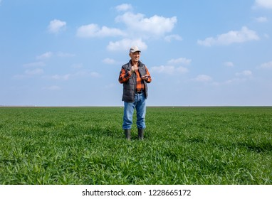 Senior farmer standing in filed looking at distance and examining young wheat corp during the sunny day.