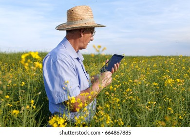 Senior farmer standing in a rapeseed field with a tablet and examining crop.