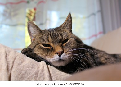 Senior female cat relaxing after a hard day.