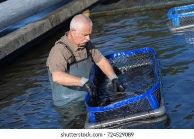 senior fish farmer at work