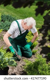 Senior gardener digging in the ground to plant flowers
