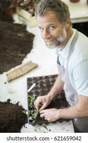 Senior gardener making cuttings