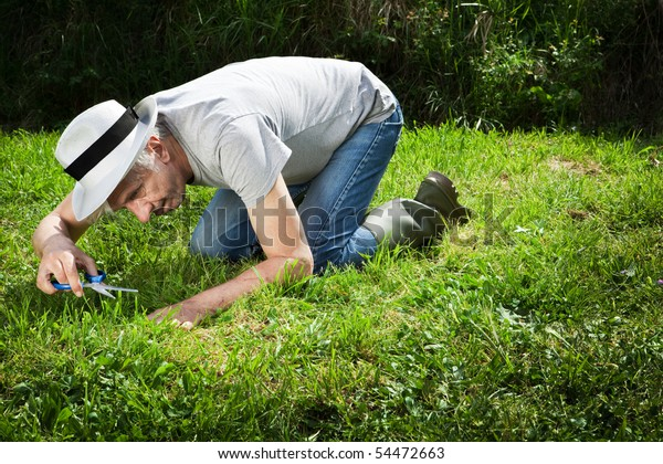 Senior gardener on his knees cutting grass with scissors.