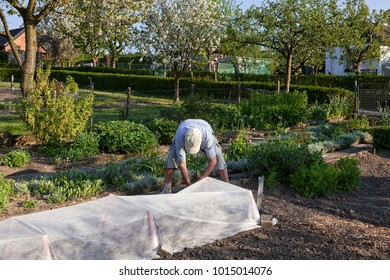 senior gardening  in the vegetable garden