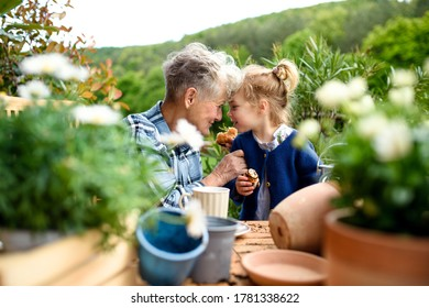 Senior grandmother with small granddaughter gardening on balcony in summer, eating.