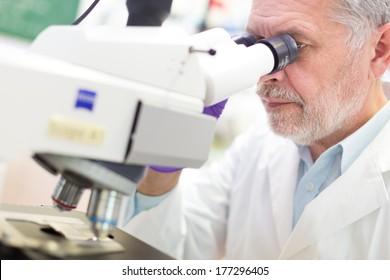 Senior head scientist  microscoping in the life science research laboratory ( diagnostics, biochemistry, pharmacy, genetics, forensics, microbiology, pharmacogenetics ...)