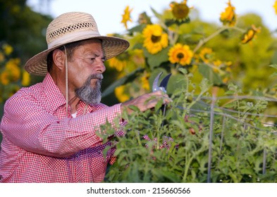 Senior hispanic male gardener