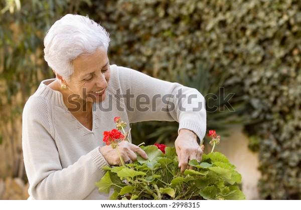 senior lady looking after her geraniums in her garden