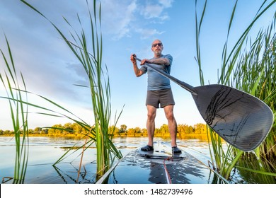 senior male paddler is paddling stand up paddleboard through reeds on a lake in Colorado