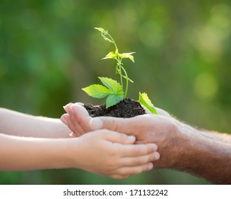 Senior man and baby holding young plant in hands against spring green background. Ecology concept