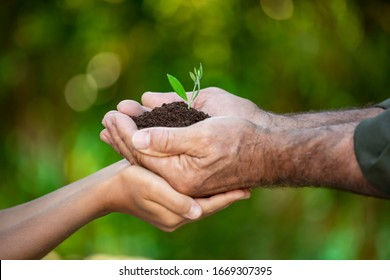 Senior man and child holding young olive tree in hands. Family with green sprout in handful. Earth day spring holiday concept.