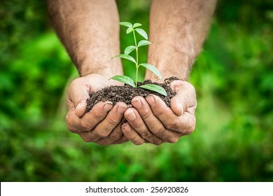 Senior man holding young plant in hands against spring green background. Ecology concept