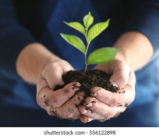 Senior man holding young tree in hands