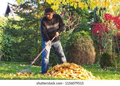 Senior man raking fallen leaves in garden at autumn. Gardener working in his garden during autumn season.