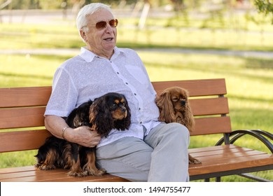 Senior man relaxing in the park at sunny day with his two adorable dogs. Retired man relax time. Two cavalier king charles spaniel dogs.