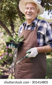 Senior man with seedlings