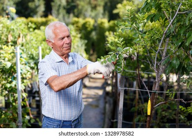 Senior man tending and cultivating garden at homestead, trimming trees