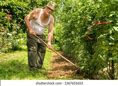 Senior man tilling the soil in the garden on a hot summer day.