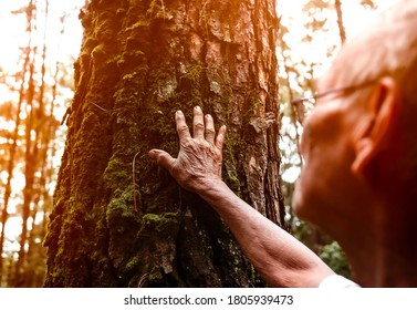 Senior man touching on old tree gently. Nature protection concept. World environment day.