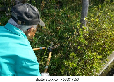 Senior man using mowing machine