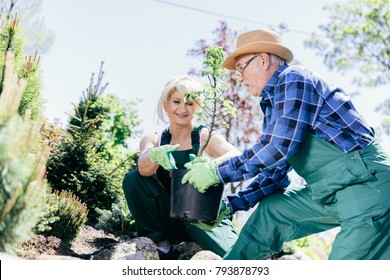 Senior man and woman planting a tree in the ground. Gardener's job.